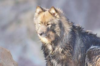 Urlaub in Südfrankreich, unser Wolf