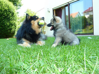 Juli 2017 Kiro mit Samu