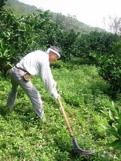 山林鎌での草刈り