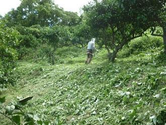 刈払機の草刈