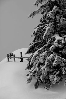 'We Were Trees' - Schladming