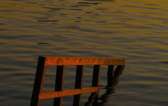 'Still Waters' - Vienna, Alte Donau