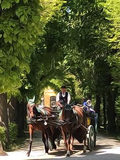 Vienna - 'Horse Drawn'