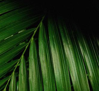 Barcelona - 'Palm'