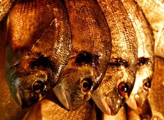 Barcelona- 'Fish Eye'