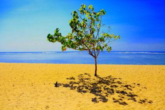 Bali - 'Beach Tree'
