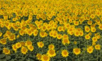 Vienna - 'Mellow Yellow'