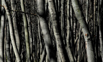 Vienna - 'Whispering Trees'