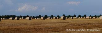 """Feld zwischen Bauerntannen und Silberberg - August 2014  -  field between the forest areas """"Bauerntannen"""" and """"Silberberg"""""""