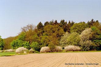 """Silberberg im Frühlung von Neu Plestlin kommend - forest area """"Silberberg"""""""