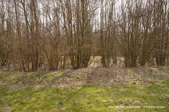 Blick auf die Grabanlage (hinter der Baumreihe)