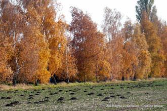 Neu Plestlin Siedlung versteckt hinter der Baumreihe
