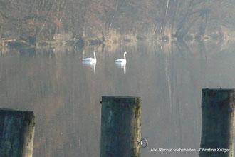 Frühnebel über der Peene beim Wasserwanderrastplatz Alt Plestlin - early morning fog - river Peene near Alt Plestlin