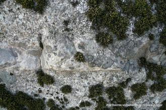 """Detail Oberfläche """"Teufelsstein"""""""