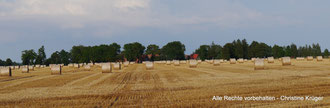 Dorfansicht Neu Plestlin von Westen - August 2014  -  view of Neu Plestlin (west side)