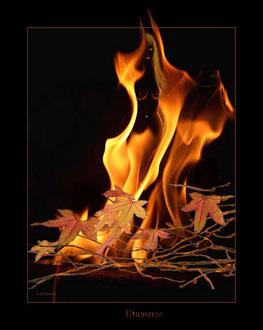 Tout feu tout femme