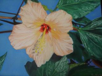 L'hibiscus