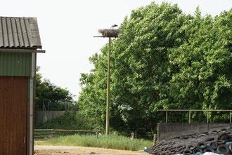 Nest 10 auf dem Hof der Familie Gaden