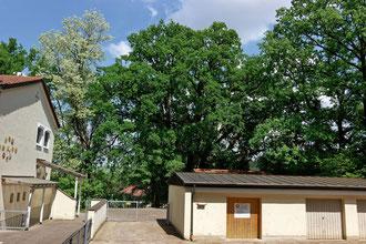 Eiche am Pfarrhaus in Eschelbach