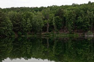 Eiche am kleinen Lienewitzsee bei Michendorf