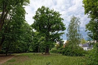 Dorfeiche in Blankenfelde