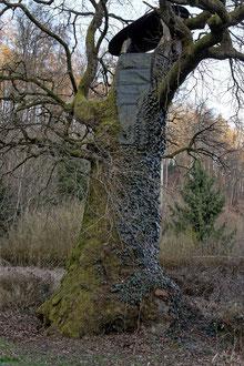 Tausendjährige Eiche in Bammental