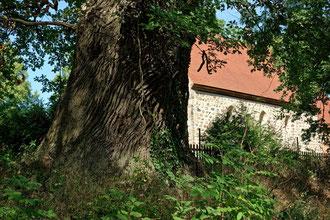 Eiche am Friedhof bei Kölzow