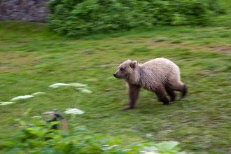 """""""Bärenwischer"""". Der kleine Bär huschte immer wieder an den Hütten vorbei."""