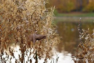 Parkteich Gotha im Herbst