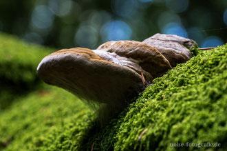 Pilz im Nationalpark Jasmund