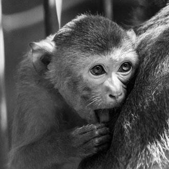 Affenkind im Tierpark Gotha