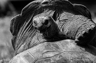 Schildkröte im Zoo Dresden