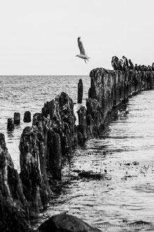Kormorane am Strand bei Glowe auf Rügen
