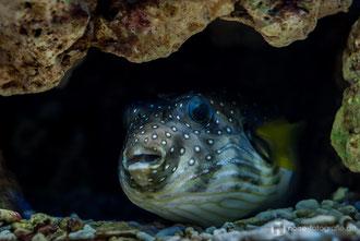 Meeresaquarium - Zella Mehlis
