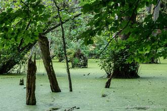Sumpf im Nationalpark Jasmund