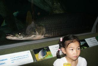 Sehr beliebt ist das Aquarium von den Familien mit den Kindern