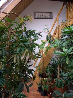 Wintergarten mit Aufgang Galerie