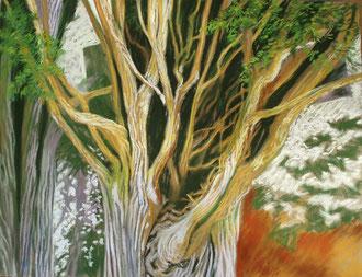 Coeur de cyprès, pastel 65x50 - Sylvie Berman Artiste peintre