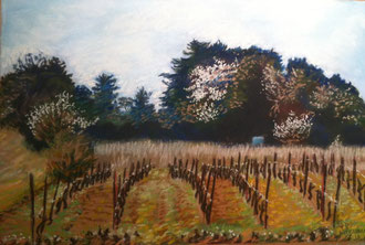 March vineyard, pastel 15x10 Sylvie Berman artiste peintre