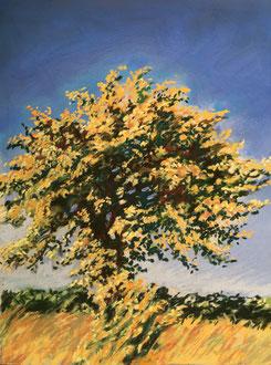L'azerolier 2 pastel 30x23- Sylvie Berman artiste peintre