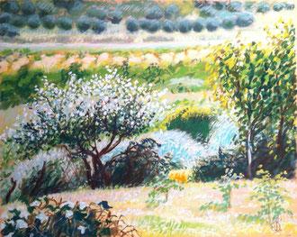 Jardin en Malepère, pastel 30x24 Sylvie Berman artiste peintre