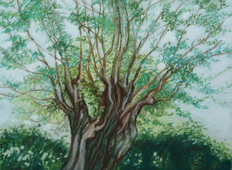Willow, pastel 11x15 Sylvie Berman artiste peintre