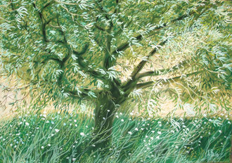 olive tree, scabiosas, hight summer, pastel 25x19 Sylvie Berman artiste peintre