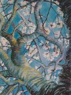 Almond tree blossoming, pastel 23x31  Sylvie Berman artiste peintre