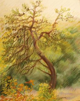 Danse du matin, pastel 40x30 - Sylvie Berman Artiste peintre (collection particulière)