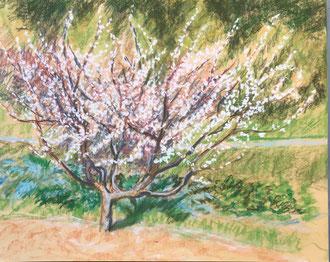 Printemps au potager, croquis pastel30x24 cm- Sylvie Berman artiste peintre