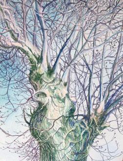 Ash tree, pastel 25x19 Sylvie Berman artiste peintre