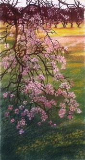 Amandier, pastel 59x32 Sylvie Berman artiste peintre