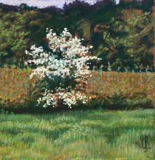 L'azerolier Pastel 20,5x 20,5cm  Sylvie Berman artiste peintre