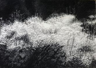 Glare (2) charcoal and pastel 43x27 Sylvie Berman artiste peintre